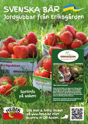 bild-A3-Jordgubbar-Eriksgarden-