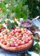 krusbarscheesecake