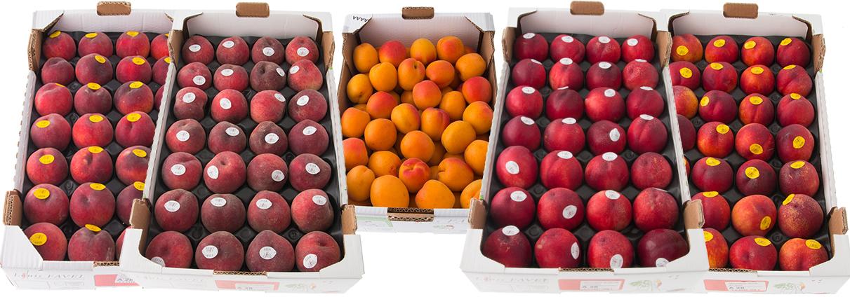 louis-favel-stenfrukter-lador-2015