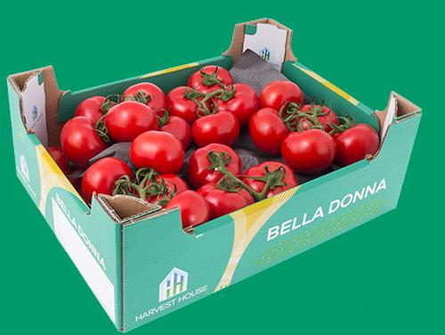 tomater-kvist-NL-Bella-Donna-lada-IMG_7347