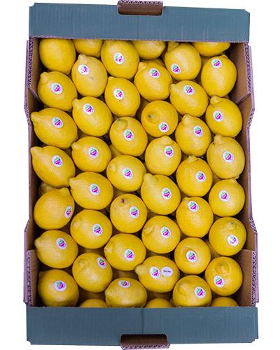 citron-lada-daily-greens-img_5835