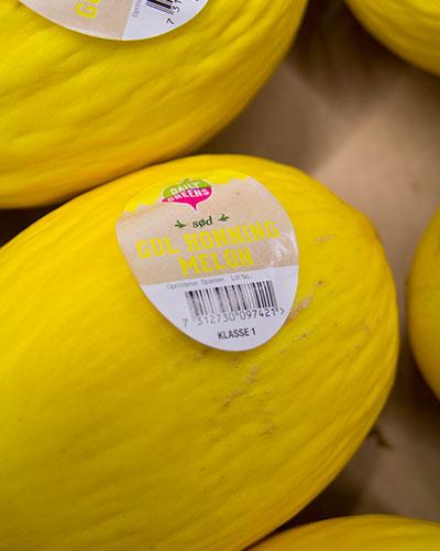 melon-honung-daily-green-nara-img_2285