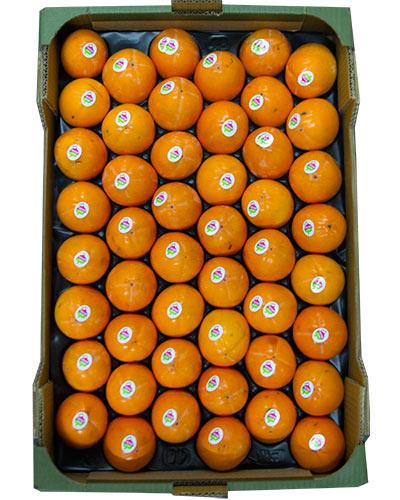 sharon-lyx-daily-fruit-lada-img_5321