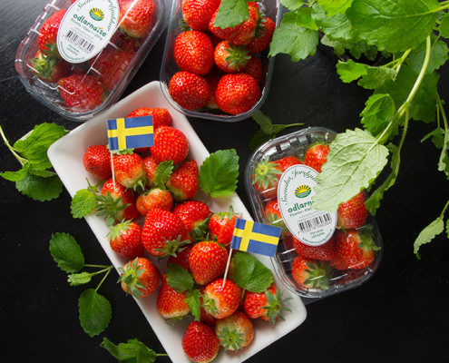 svenska-jordgubbar-vaxthus