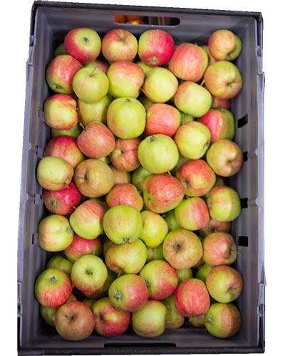 apple-Nanna-rb-IMG_2637-400x500