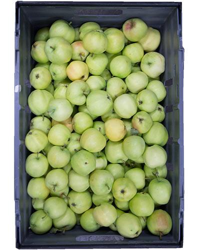 apple-transparent-blance-rb-IMG_2640