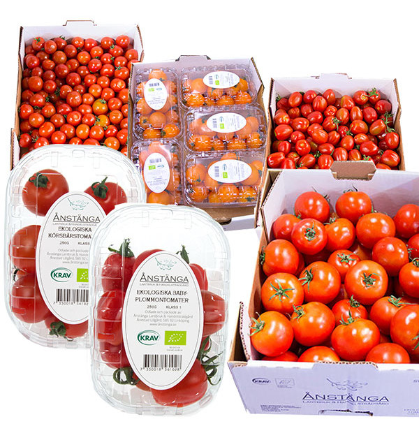 anstanga-tomater
