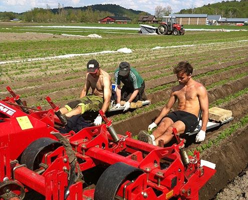 stocken-plantering2