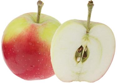 vanliga äppelsorter sverige