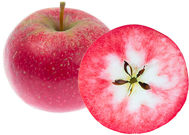 apple-rosette-bred