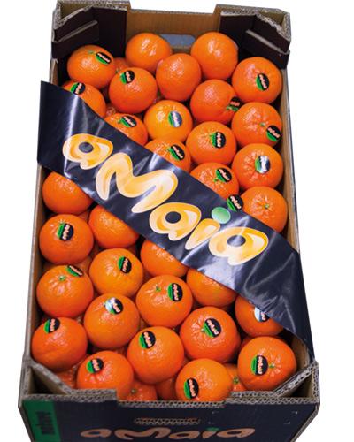 tango-clementine-amaia