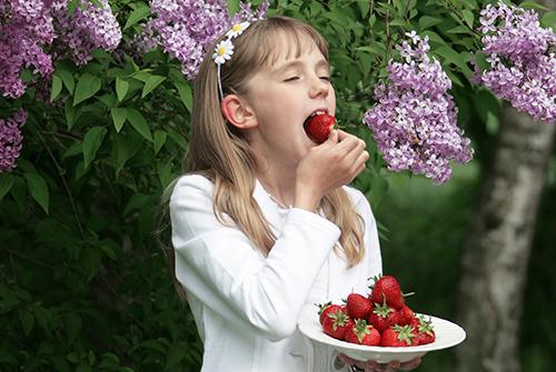 Lonnslatts-bar-maja-ater-jordgubbar