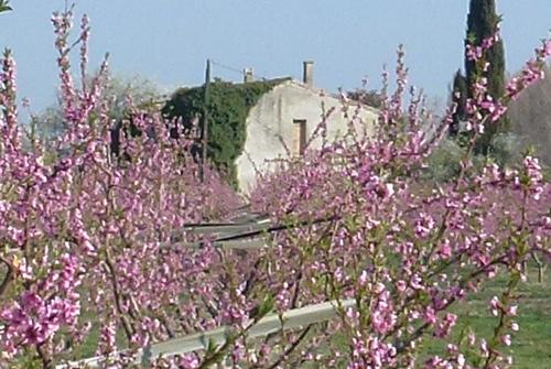 Louis-favel-garden