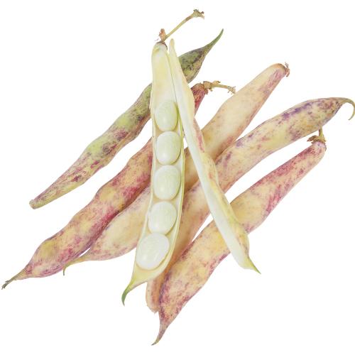 coco-de-paimpol-bonor