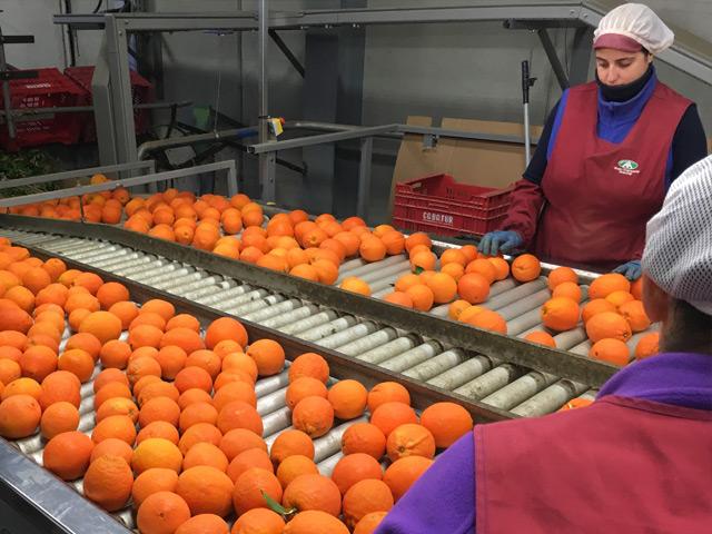 apelsiner-bouquet-manuell-kontroll