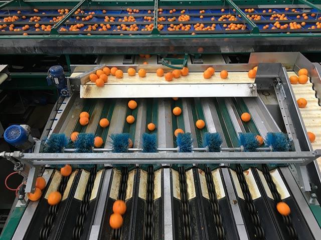 citrus-bouquet-packhus-sortering-tvattning-IMG_1026