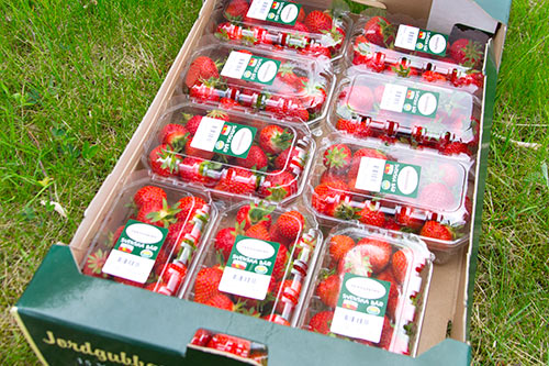 jordgubbar-hardtop-lada-eriksgarden