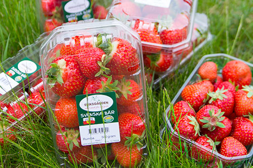 jordgubbar-hardtop-lada-eriksgarden2
