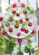 matjessilltarta-m-orter-o-radisor-IMG_0968-recept