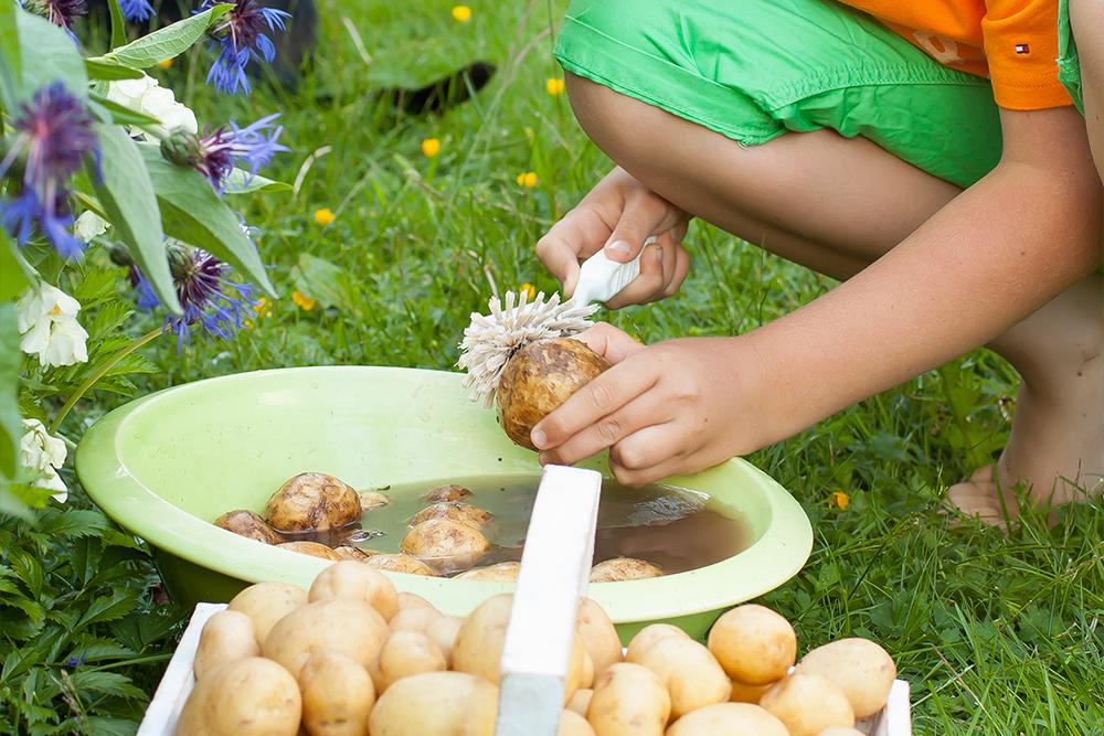 tvattad-potatis