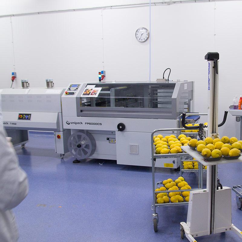 hebe-produktion-citron