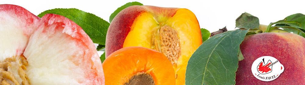 louis-favel-franska-stenfrukter-blogg