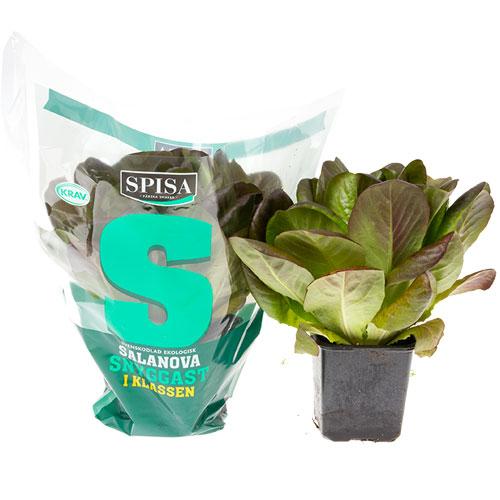 spisa-salanova