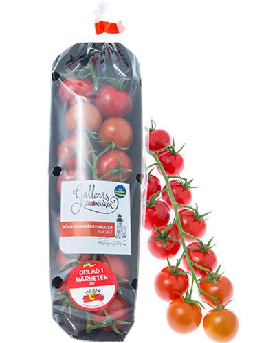 tomater-korsbarskvist-gallenas-pkt-m-tomater-IMG_9490