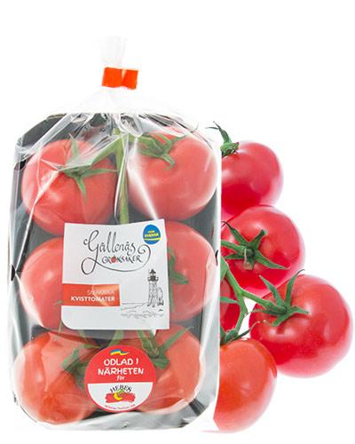 tomater-kvist-gallenas-pkt-m-tomater-IMG_9481