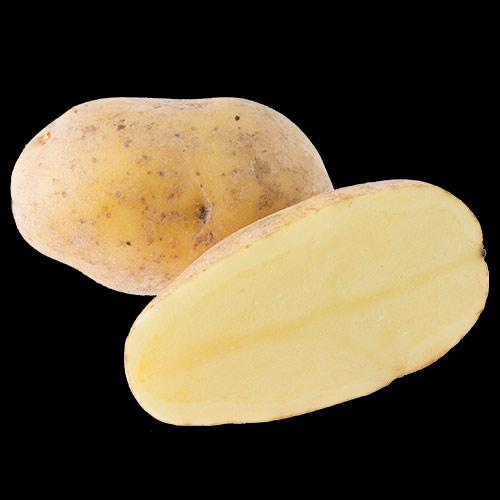 potatis-bintje