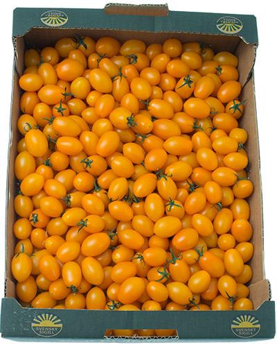 tomater-sunnana-orange-babyplum-lada-IMG_4498