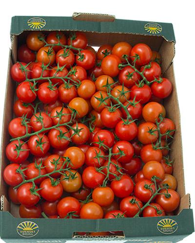 tomater-sunnana-svea-kvist-lada-IMG_4504
