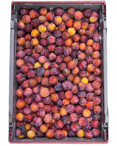 plommon-opal-rb-8kg-se-IMG_2555
