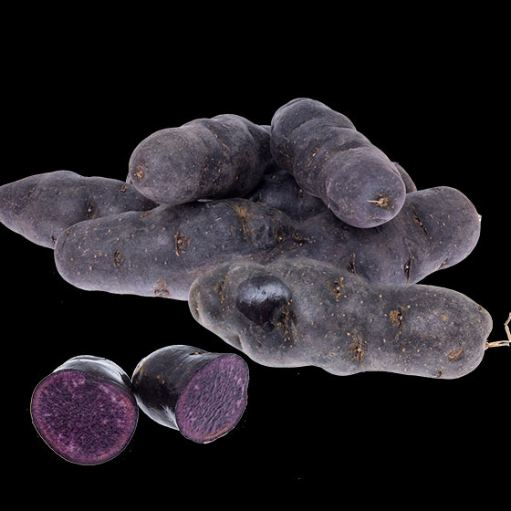 potatis-le-vitelotte