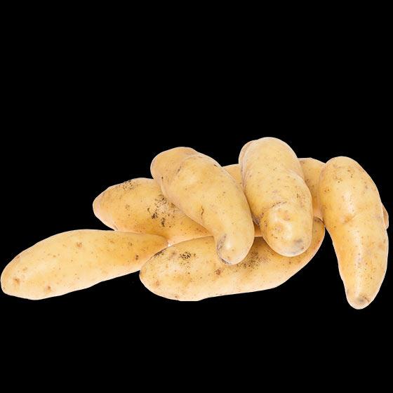 potatis-ratte