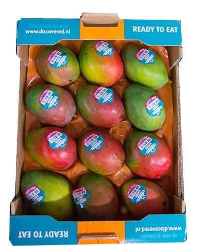 mango-12st-keitt-discovered-IMG_3270