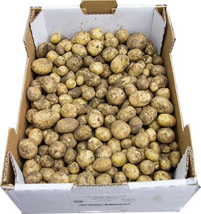potatis-farsk-se-5kg-friland-2014
