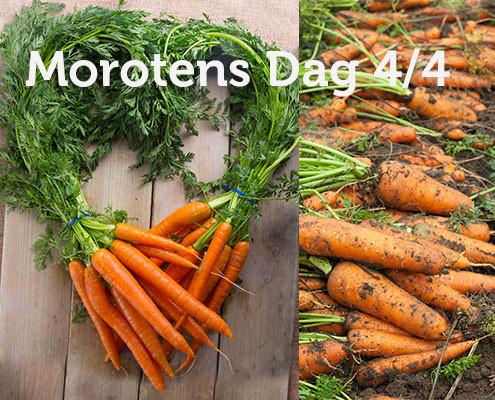 morotens-dag-495x400