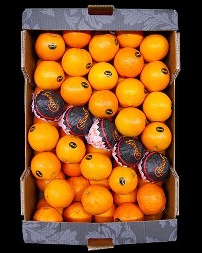 Apelsin-Navel-