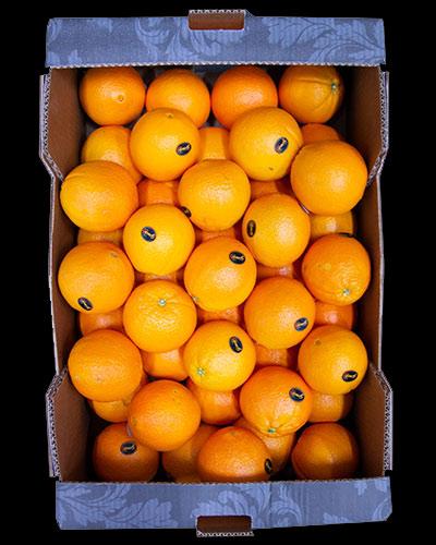 Apelsin-Premium-Jumbo-Lane-Late-1-2-