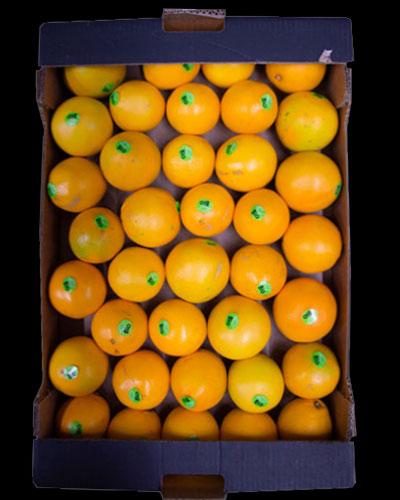 Apelsin-eko-1-lag-8kg-ES