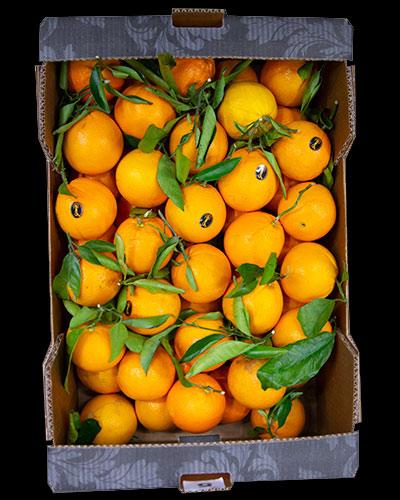 Apelsiner-Premium-med-blad-