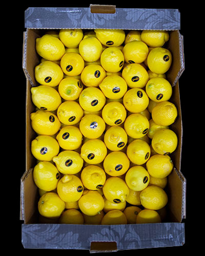 Citroner-90st-