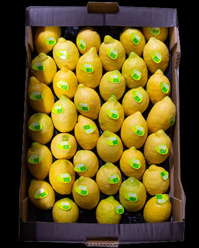 Citroner-eko-1-lag-