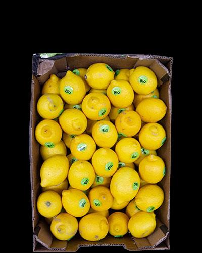 Citroner-eko-6kg-stickers