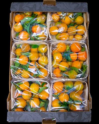 Clementiner-Clemenrubi-med-blad-6x1kg-Genesis-ES-IMG_3122-2