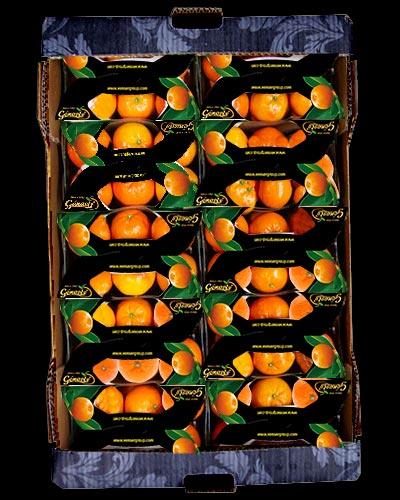 Clementiner-Nadorcott-Korg-montage-Genesis-ES-IMG_7009