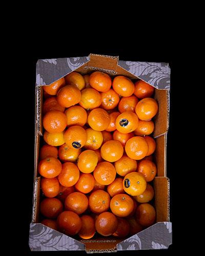Clementiner-Orri-