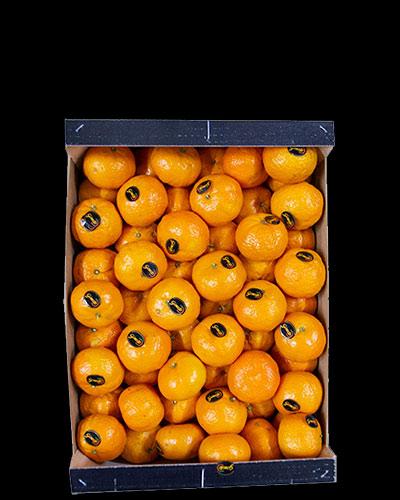 Clementiner-Premium-Gold-Nugget-