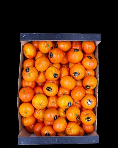 Clementiner-Premium-Nadorcott-1-2